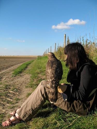 How Training a Wild Hawk Healed One Woman's Broken Heart