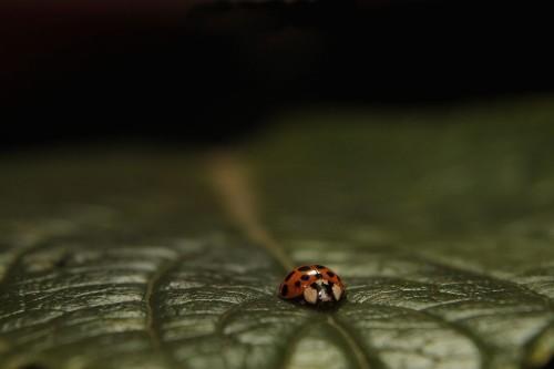 Macro world Photo by Ricardo Venerando — National Geographic Your Shot