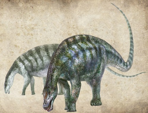'Amazing Dragon' Fossil Upends Origins of World's Largest Dinosaurs