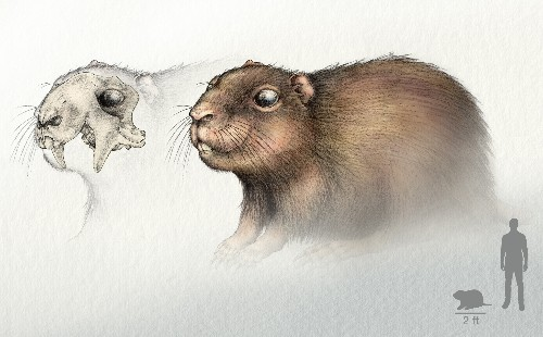 Fossil From Dinosaur Era Reveals Big Mammal With Super Senses