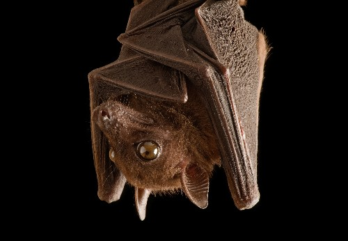 6 Bat Myths Busted: Are They Really Blind?