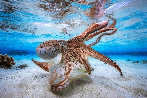 See Award-Winning Underwater Photos From Around the World