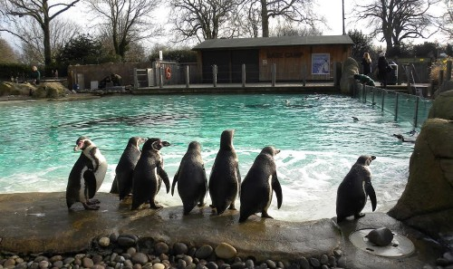 In Which I Visit a Penguin Experiment and Hilarity Ensues