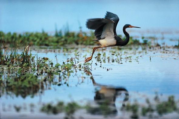 Into the Wild on Kiawah Island
