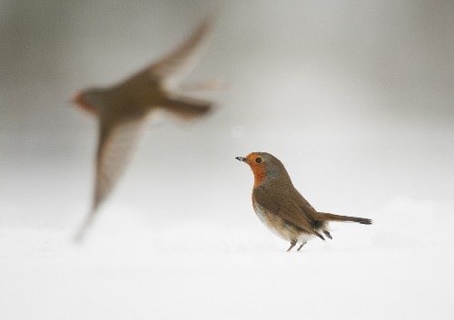 Cracking Mystery Reveals How Electronics Affect Bird Migration