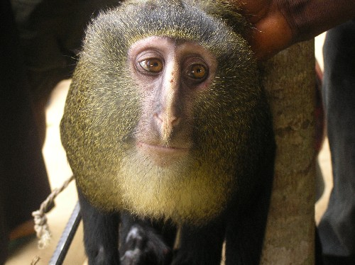 Pictures: Top 10 Newly Discovered Species of 2012
