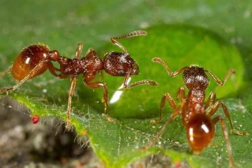 To Stay Alive, Ants Dump Their Dead