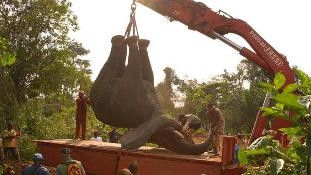 How to Move a Two-Ton Elephant to Safety