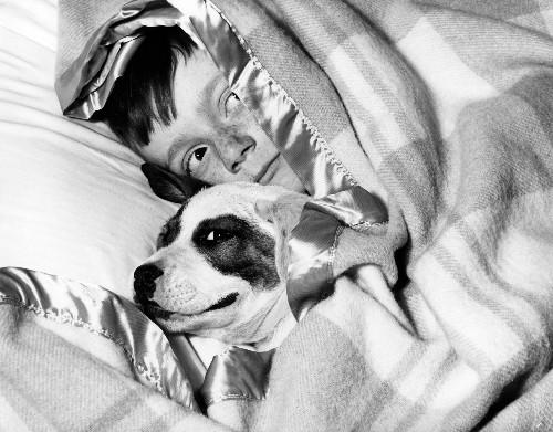 U.S. Pet Poll: Most Prefer Dogs, 18 Percent Want Dinosaur