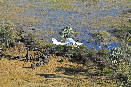 Counting Elephants From the Air in Africa's Newest World Heritage Site