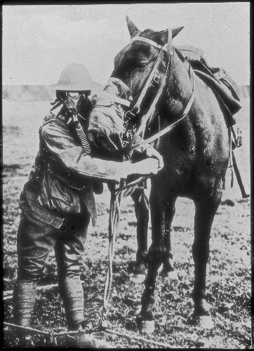 On the Hundredth Anniversary of the Start of World War I, Remembering the Part Animals Played