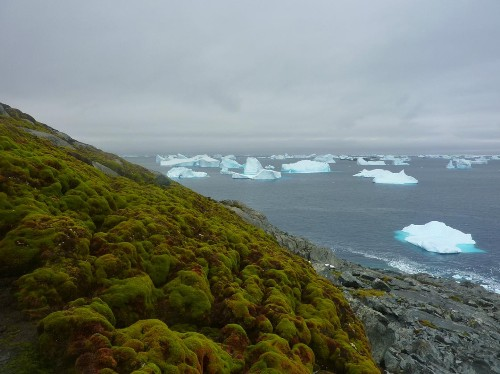 Fast-Growing Moss Is Turning Antarctica Green