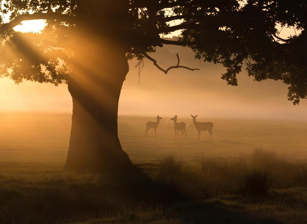 Appreciating nature through the lens of lockdown