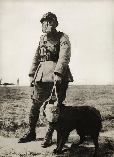 Dogs at War: Three-Legged Dog Delivers Crucial Message in WWI