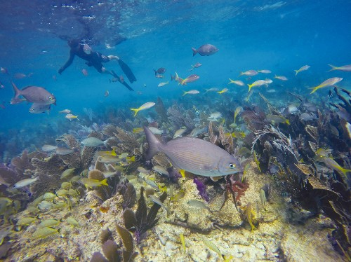 Florida by Water: Snorkel a Keys Offshore Reef