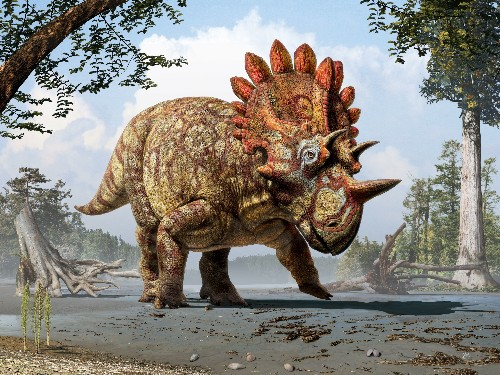 Newly-Named Horned Dinosaur was a Copycat