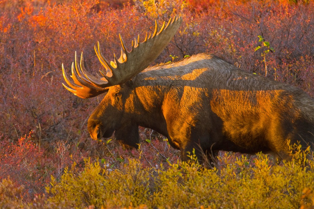 Fascinating ways animals prepare for fall