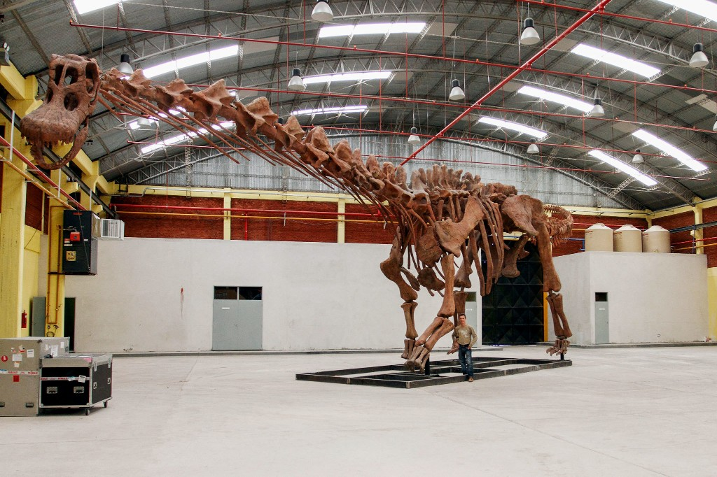 New dinosaur species was the largest animal ever to walk the Earth