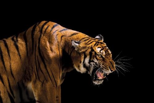 What we lose when animals go extinct