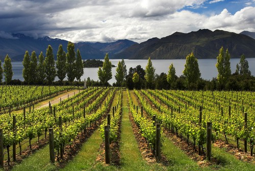 Reader Recs: World's Best Wine Regions