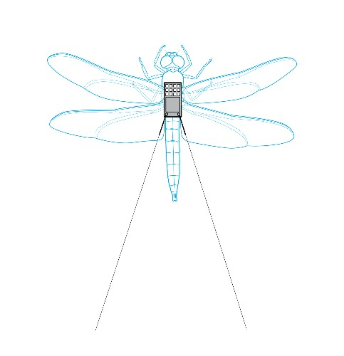 Tiny Dragonfly Backpacks Reveal Mysteries of the Brain