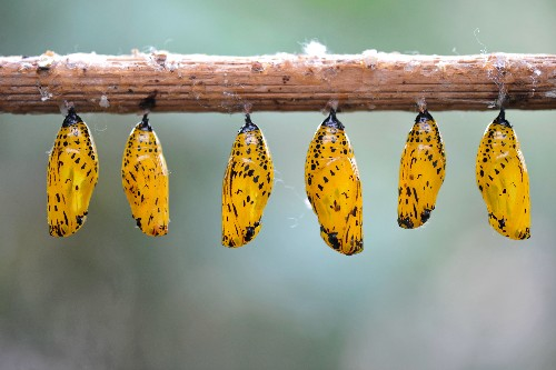 Why Do Butterflies Have Such Vibrant Colors and Patterns?