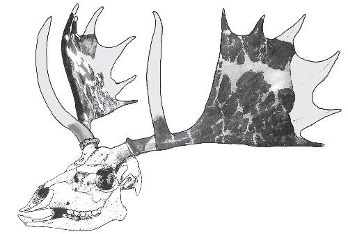 Paleo Profile: The False Moose