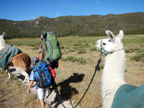 2 Years, 2 Llamas, and Learning to Live in Style in the Backcountry
