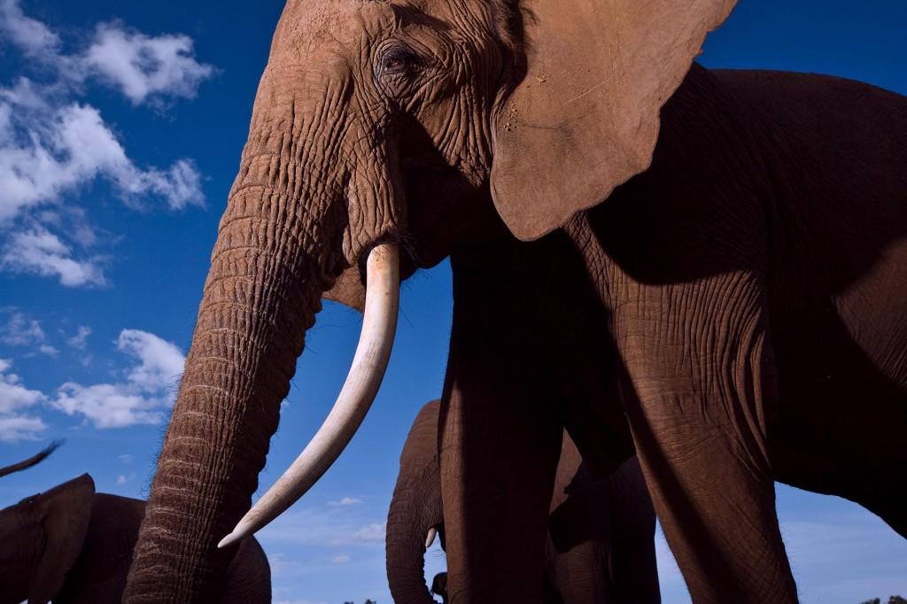 Elephant Requiem & RHINOS TOO! cover image
