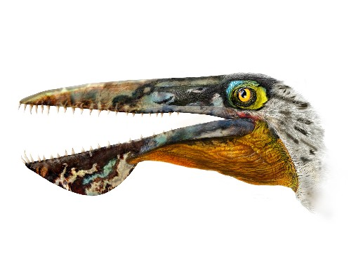 Ancient Flying Reptile Ate Like a Toothy Pelican