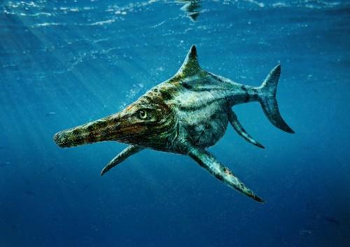 Motorboat-Size Sea Monster Found, Sheds Insight on Evolution