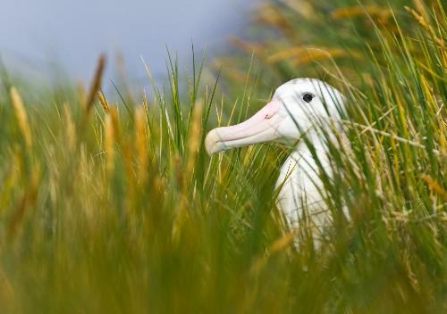 Has Half of World's Wildlife Been Lost in Past 40 Years?