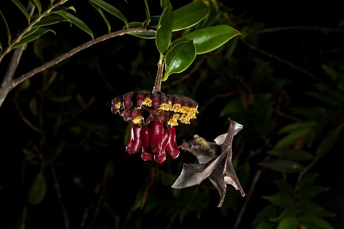 To Know Bats Is to Love Them