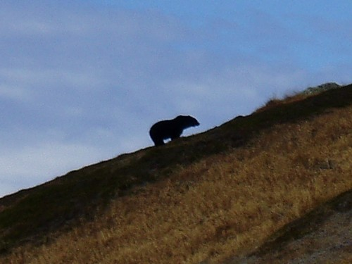 Should Grizzlies Be Restored to the North Cascades?
