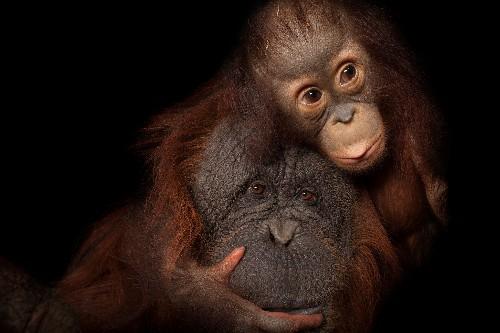 Widely misinterpreted report still shows catastrophic animal decline