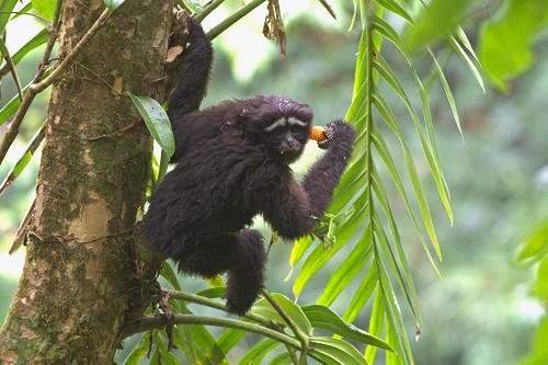 New Species of Primate Is Named After 'Star Wars'