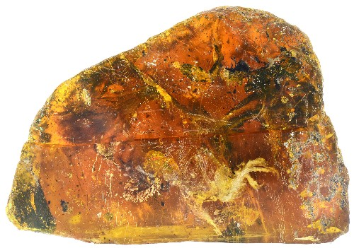 Baby Bird from Time of Dinosaurs Found Fossilized in Amber