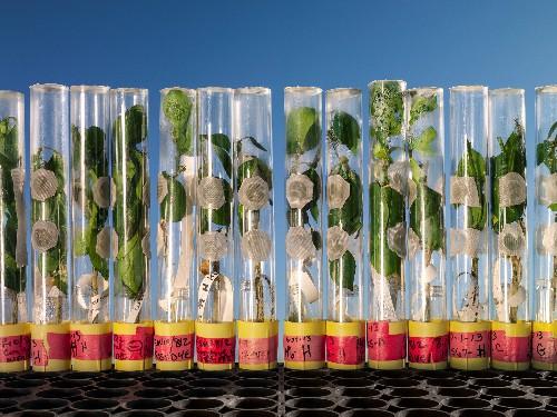 Is Genetically Engineered Food A Fraud?