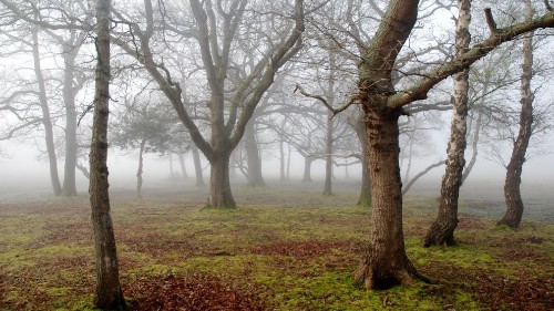 New Forest National Park, England