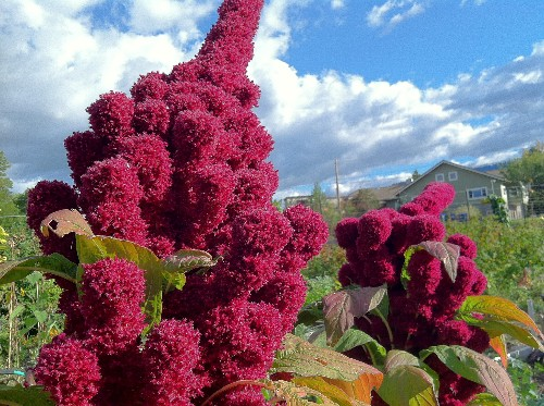 Your Shot: 7 Nutritious Plants at Risk