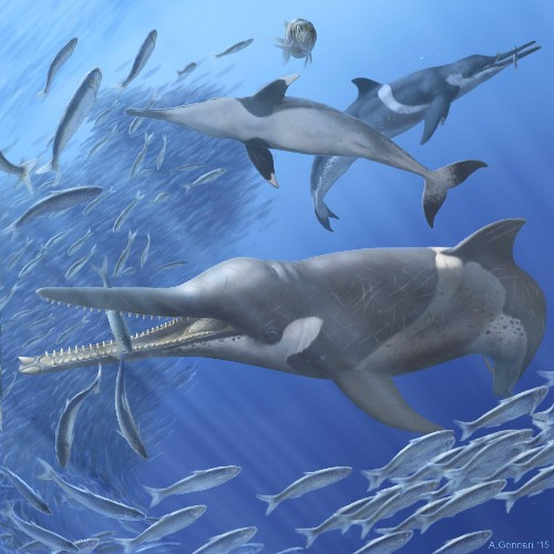 Fossil Whale Found Surrounded by Prehistoric Puke