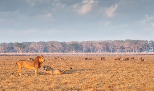 Devastated by war, this African park's wildlife is now thriving