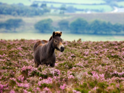 Exmoor National Park, England