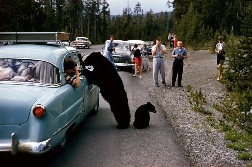 Classic Yellowstone