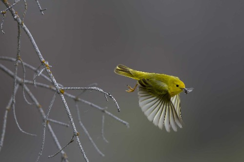 National Geographic's Favorite Bird Pictures