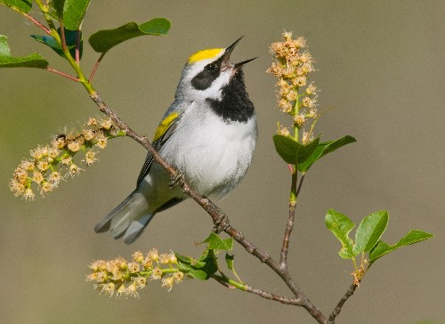Birds May Have Sensed Severe Storms Days in Advance