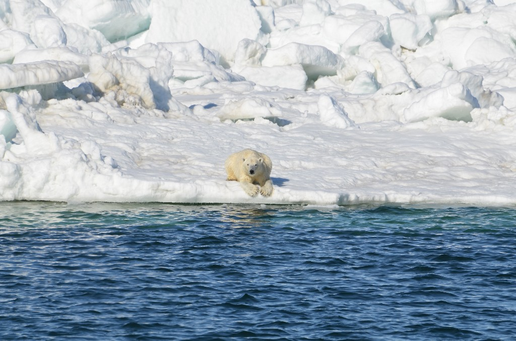 poor future for polar bears. - Magazine cover