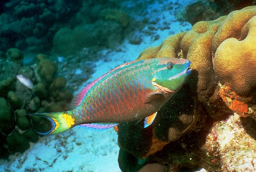 Tropical Fish Cause Trouble as Climate Change Drives Them Toward the Poles