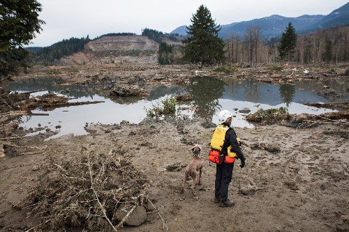 As Scientists Examine Landslide, Questions About Logging's Potential Role