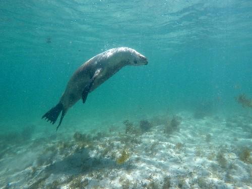 South Australia's Adventures of a Lifetime: Swim With the Wildlife